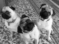 Types Of Dog Breeds Gif #7231 - Funny Dog Gifs| Funny Gifs| Dog Gifs