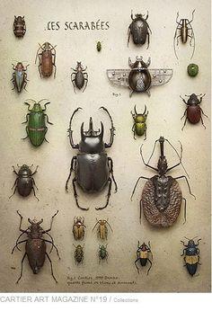 #cartier  #beetle peter lippmann #photo serie