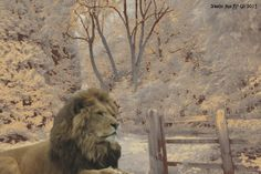 Esta imagen ilustra un artículo sobre la obra de C.S. Lewis http://www.vavel.com/es/libros/262197-el-bien-contra-el-mal-o-la-simplicidad-del-reencuentro-con-dios-de-c-s-lewis.html