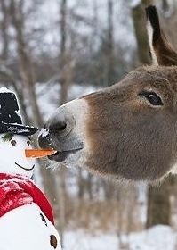 christmas cards, kiss, hors, winter, carrot, donkey, bon appetit, snow, friend