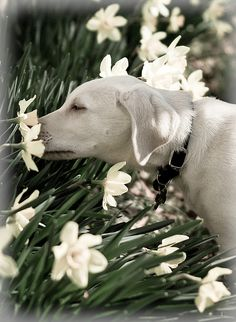 Even dogs need to take time to stop and smell the flowers