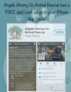 Angels Among Us Animal Rescue @hollycoupons88