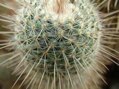 cactus green desert nature plant