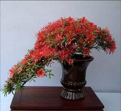 blooming bonsai 7
