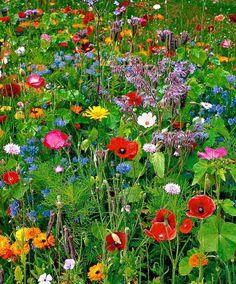 Wilde bloemen, een paar zakjes wilde bloemen zaaien geeft dit mooie resultaat  ♥