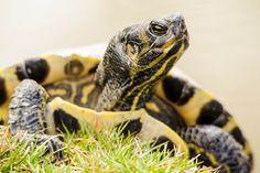 Turtles are sunning themselves at the EJC Arboretum pond once again! http://www.jmu.edu/arboretum/arboretum-life.shtml
