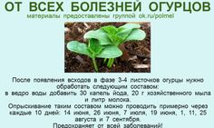 (35) Одноклассники Organic Farming, Organic Gardening, Gardening Tips, Summer House Garden, Home And Garden, Small Farm, Green Life, Growing Vegetables, Vegetable Garden