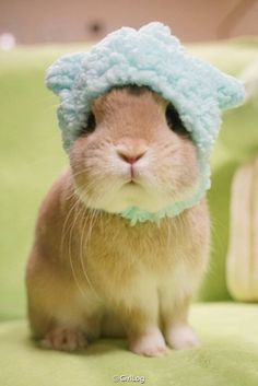 Bundle up bunny, its cold outside ❤