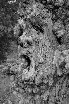 Tree Spirit- looks pretty tried Weird Trees, Enchanted Tree, Dame Nature, Tree People, Tree Faces, Unique Trees, Tree Carving, Old Trees, Nature Tree