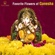 Special flowers to #Ganesha bring particular blessings http://www.astroved.com/articles/favorite-flowers-of-lord-ganesha