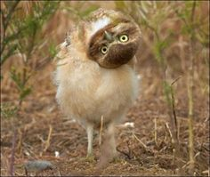 if i were a bird, i'd be an owl...for this very reason!