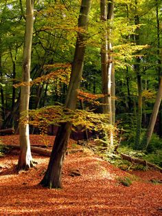 Burnham Beeches near Maidenhead, UK;