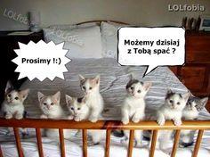 słodkie kotki, memy z kotami, fajne memy o spaniu z kotkami, fajne obrazki na fb, kocie memy na noc - kliknij po więcej! Cute Animal Memes, Funny Animals, Cute Animals, Funny Cat Memes, Funny Cats, Silly Cats, Pretty Cats, Kittens Cutest, The Funny