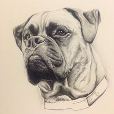 My murph dog captured forever in pencil.