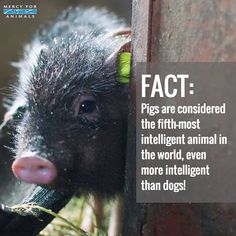 That's what a pig would like to think ! Keep oinking ! Yes pigs are intelligent but enjoy rolling in the filth. So Repulsive