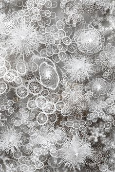 Paper Life – The artist Rogan Brown cuts thousands of microorganisms in paper (image)