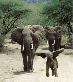 Dumbo ^-^♡
