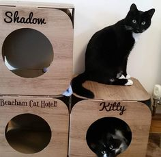 Yay!!!  we are so pleased they like them  you have a lovely fur-family  thank you do much!  #cat #catsofinstagram #cats_of_instagram #catfurnature #catfurniture #catsinboxes #cattoy #INSTACAT_MEOWS #cutecat #PurrMachine #catsinboxes #catbox #Excellent_Cats #BestMeow #dailykittymail #thecatniptimes #catcube #catpod #ArchNemesis #FlyingArchNemesis #myindoorpaws #ififitsisits #cutecatcrew #catchalet #catnip #themeowdaily #kitty #catpyramid #miuandmaosfurriends