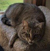 "Reunited: ""Thank you everyone that may have been looking out for our brown tabby cat, Bella. She may have been shut up in someone outbuilding and the 9 days she was gone. She had lost 3 lbs. which is a lot for a 10lb. cat. Was Lost 3/17 Virginia Beach, Va. Le Cove Dr"