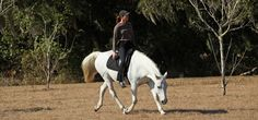Dressage, Naturally - Karen Rohlf-Dressage judge and Natural horsemanship student combines the two in an amzing way!