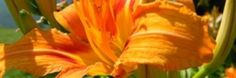 A Better Look: Editing Services | Carol Davis - Author