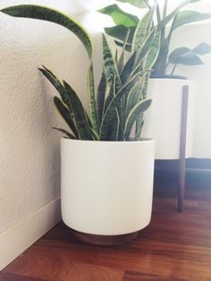 Case Study Pots - DIY, add circular piece of wood under pot painted solid color Large Indoor Planters, Outdoor Planters, Garden Planters, Indoor Plants, Types Of Houseplants, Easy House Plants, Garden Design Plans, Pink Houses, Snake Plant