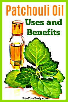 Patchouli Oil Uses and Benefits for Your Health Essential Oils Cleaning, Essential Oil Uses, Natural Essential Oils, Patchouli Oil, Patchouli Essential Oil, Bergamot, Calendula Benefits, Oil Benefits, Health Benefits
