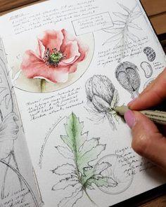 Nature Sketch, Nature Drawing, Botanical Drawings, Botanical Art, Watercolor Journal, Watercolor Art, Arte Sketchbook, Nature Journal, Motif Floral