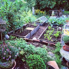En del av köksträdgården  #odlingslåda #odla #köksträdgård #kitchengarden #grow