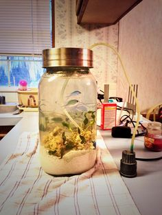 Mason jar aquarium,awesome exept the fish, they can't be in their.