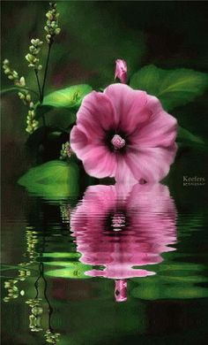 animated graphics animated gifs flores water reflection animated ...