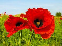 mazzi di fiori di campo - Cerca con Google