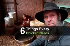 6 Things Every Chicken Needs