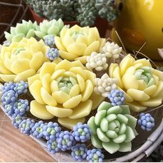 60 Simple Succulent Diy Ideas For You – Cactus
