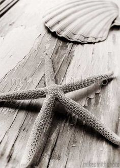 Starfish Sea Shell Photo Black White Nautical Decor Nature Print Beach Home Cottage Shabby Chic Wall Art Vintage Coastal Living Photography