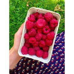 my friend and I had the BEST picnic in Munich today! We had a giant wholemeal baguette w hummus, avo, cherry   sundried toms, beetroot salad, cous cous salad, olives, corn chips, a dragon fruit, donut peaches and these incredible raspberries  #Padgram