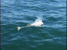 One of the Rarest Animals on Earth Spotted in the Baltic Sea
