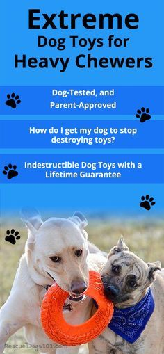 Indestructible Dog Toys With A Lifetime Guaranteeits Hard To Find