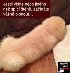 Funny quotes animals laughing so hard poor dog 63 Ideas for 2019 Funny Fails, Funny Dogs, Funny Animals, Sleeping Puppies, Poor Dog, Mind Tricks, Laughing So Hard, Cute Faces, Funny Texts