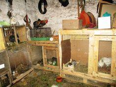 Berçário e dormitório das aves pequenas
