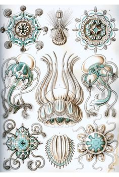 L'INSTANT MAGIC: Biological illustrations (Ernst Haeckel)