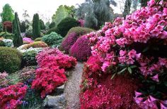 Leonardslee Gardens, with pink flowering Japanese Azeleas and Rhododendrons, Lower Beeding, West Sussex, UK. By: ukgardenphotos