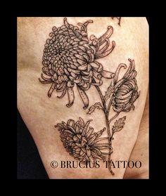#BRUCIUS #tattoo #sf #flora #flower #Scientific #illustration #Chrysanthemum #etching #engraving #art #leg #black #ink #work