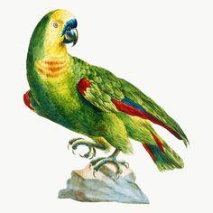 how do html color codes work Vintage Birds, Vintage Images, Vintage Bird Illustration, Image Fun, Free Image, Pet Rocks, Classical Art, Bird Pictures, Exotic Birds