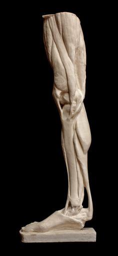 44 Best Anatomical Sculpture Images On Pinterest Human Anatomy