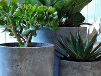 Stoer! #kamerplant #karelhendriksen #tuincentrum #KH_TC