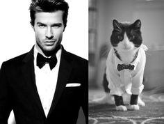 27 gatos que podrían ser modelos.