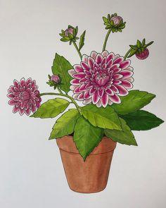 584 vind-ik-leuks, 19 reacties - ♡ Plants & Illustrations ♡ (@drawingplantlady) op Instagram: 'Dahlia drawing '