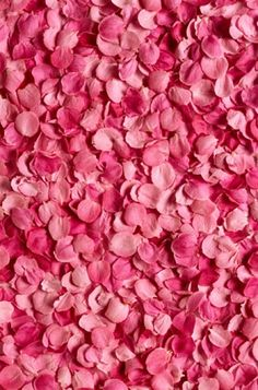rose petal pink background picture material