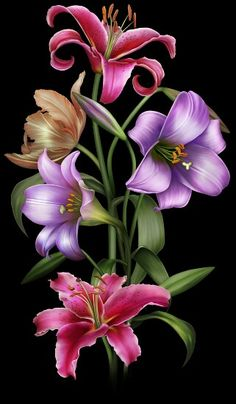 Animated pink lillies pictures photos and images for facebook lillys mightylinksfo